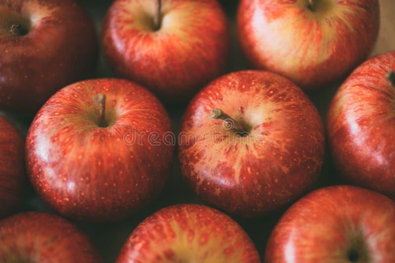 Czerwoni świezi jabłka jako tło Zamyka w górę widoku rozsypisko wyśmienicie jabłka jako tekstura i tło zdjęcie royalty free
