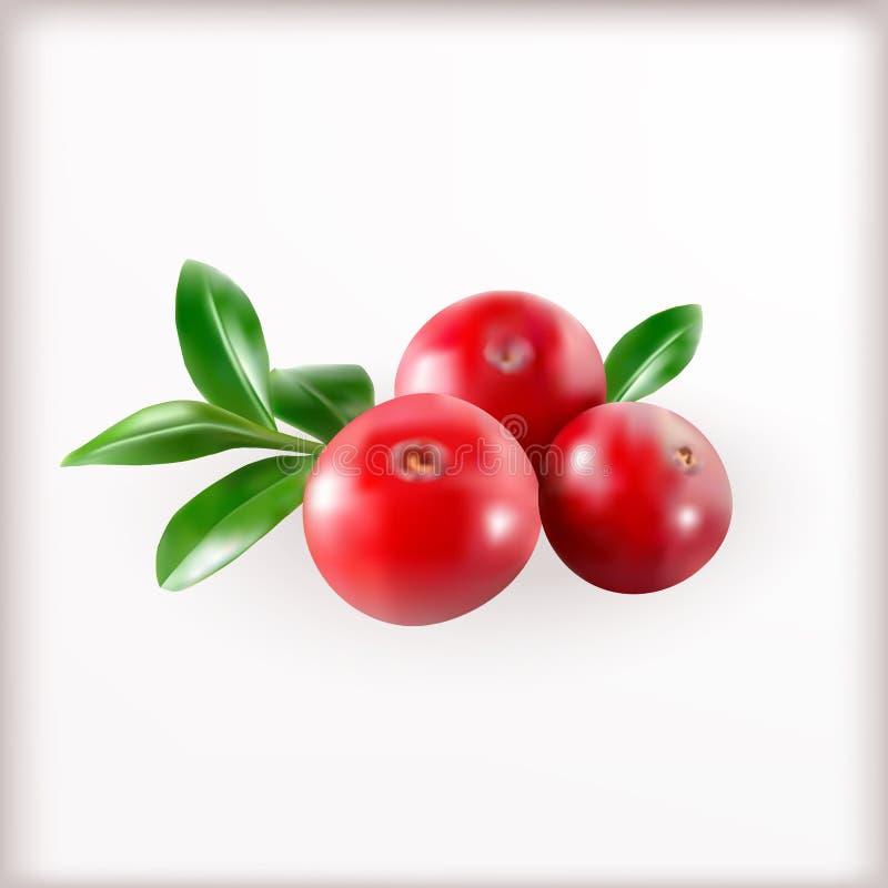Czerwoni Cranberries Z liśćmi ilustracja wektor
