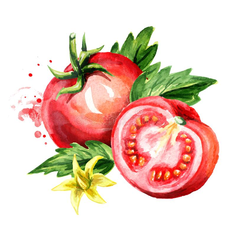 Czerwoni dojrzali pomidory z zielonym liścia i kwiatu składem Waterc ilustracja wektor