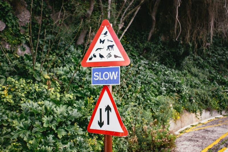Czerwoni drogowi znaki nad i pod błękit ZWALNIAJĄ znaka obrazy stock