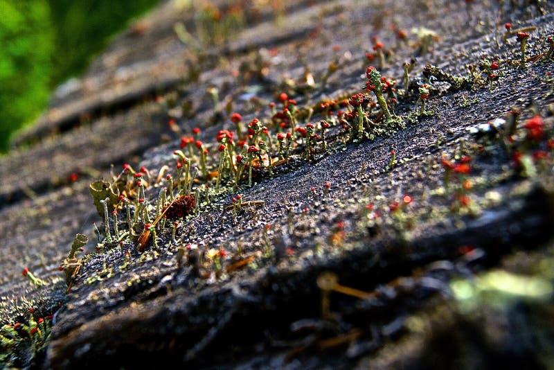 Czerwoni grzyby na dachu obraz stock