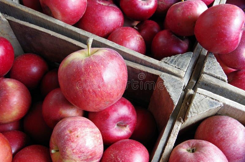 Czerwoni jabłka wypiętrzający w drewnianych rolnych skrzynkach zdjęcia stock