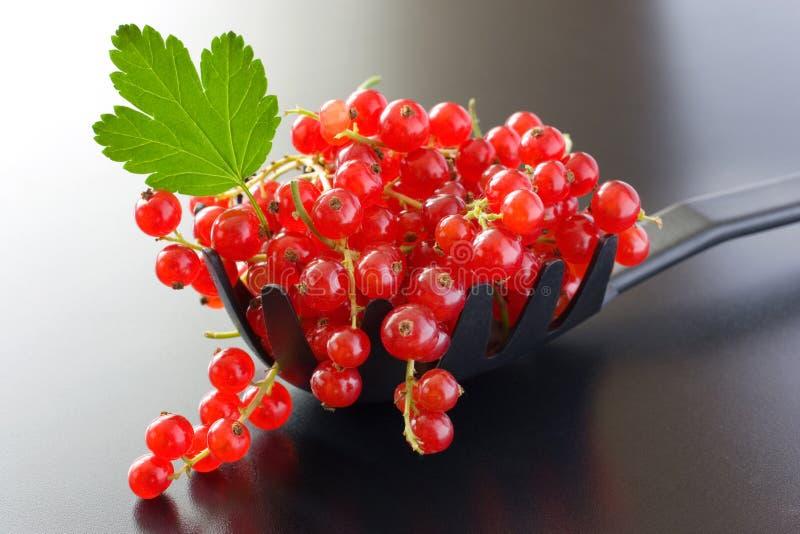 czerwoni jagoda rodzynki obrazy stock