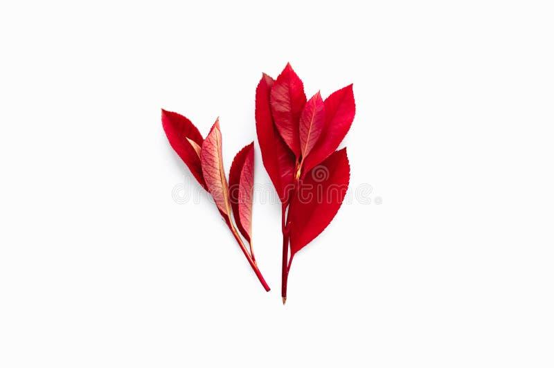 Czerwoni jesieni śniadanio-lunch z liśćmi Odizolowywający na białym tle fa fotografia stock