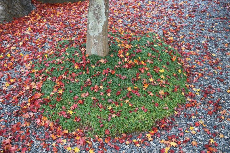 czerwoni kolorowi jesień liście na lasowej podłoga obraz stock