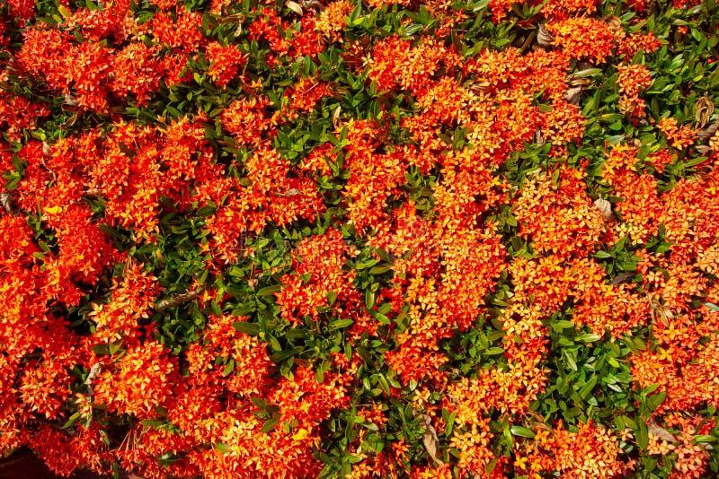 Czerwoni kwiaty są zielonym tłem obrazy stock