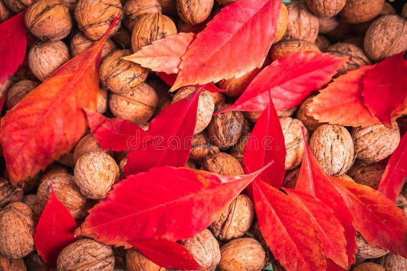 Czerwoni liście i orzechy włoscy fotografia stock