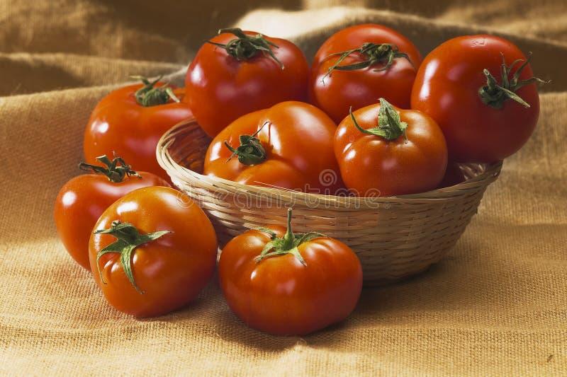Download Czerwoni pomidory obraz stock. Obraz złożonej z jedzenie - 13341435
