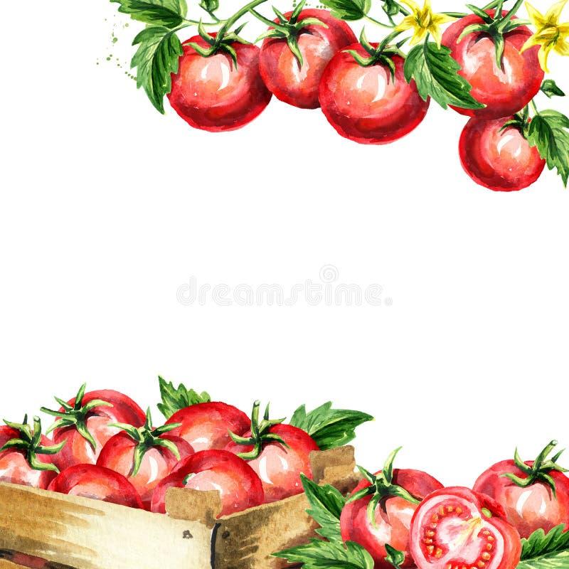 Czerwoni pomidory i liście obciosują tło Akwarela pociągany ręcznie szablon ilustracja wektor