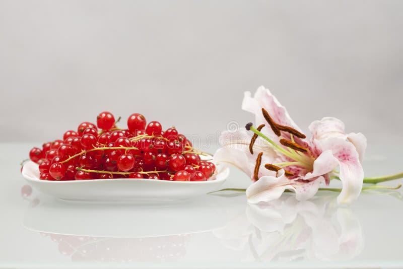 Czerwoni rodzynki na białej menchii lelui i talerzu fotografia royalty free