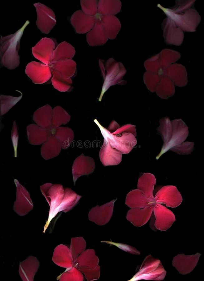 czerwoni spadać kwiaty obraz stock