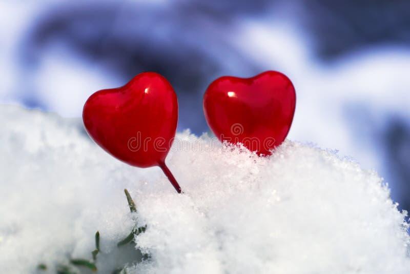 Czerwoni walentynka lizaka serca na świerczyny gałąź zakrywającej z białym istnym śniegiem obraz stock