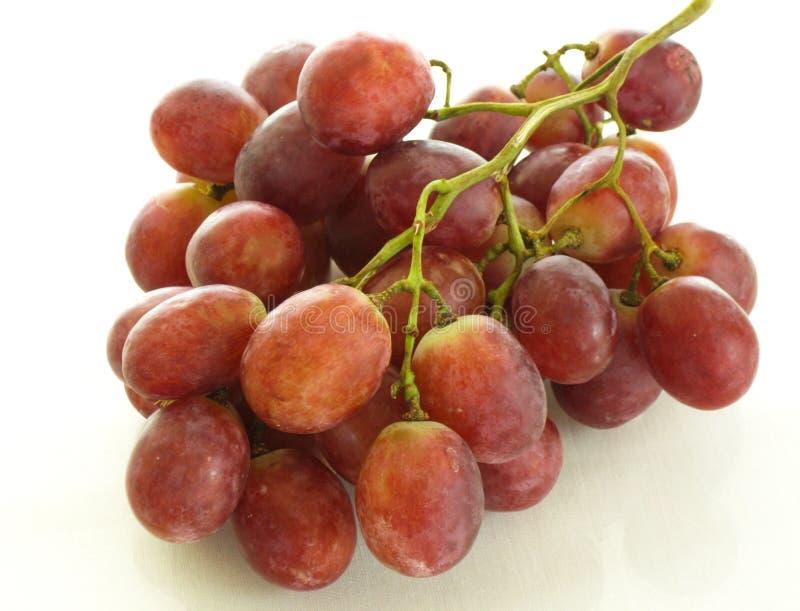 Czerwoni winogrona wyśmienita funda, winemaking zdjęcie royalty free