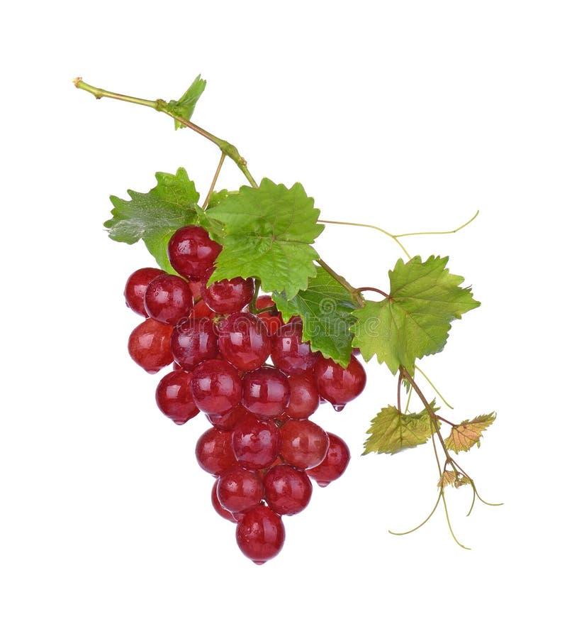 Czerwoni winogrona z kropl? odizolowywaj?c? na bia?ym tle woda obraz royalty free