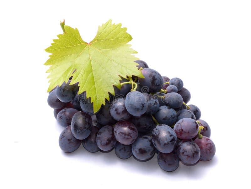 Czerwoni winogrona z liśćmi zdjęcia stock