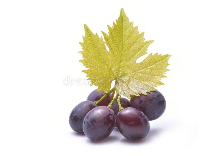 Czerwoni winogrona z liśćmi odizolowywającymi na bielu zdjęcia royalty free