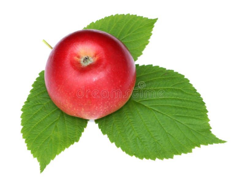 czerwony Apple z zielonymi malinowymi liśćmi odizolowywa białego tło n zdjęcia royalty free