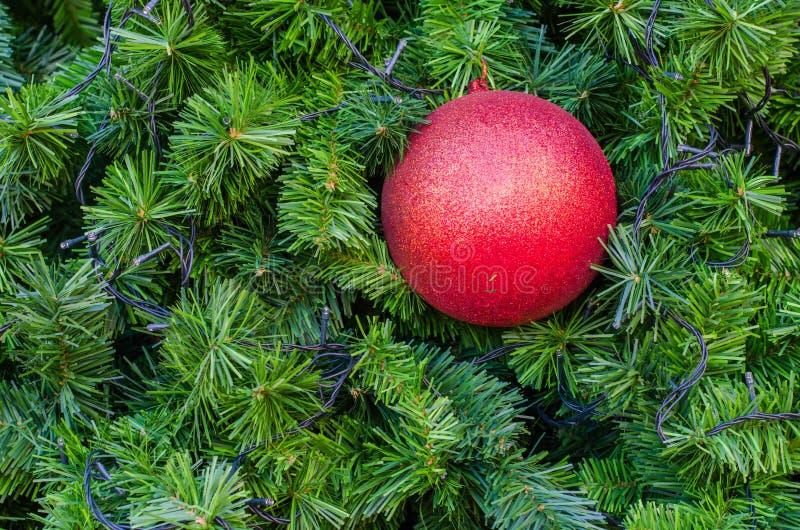 Czerwony Bożenarodzeniowy balowy obwieszenie na drzewie z bliska obraz royalty free
