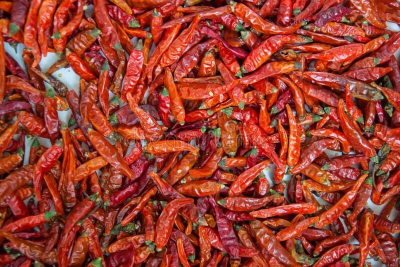 Czerwony chłodny pieprzowy tło, Suszy pieprze na białym tle Wysuszeni gorący chili pieprze, karmowy składnik zdjęcie stock
