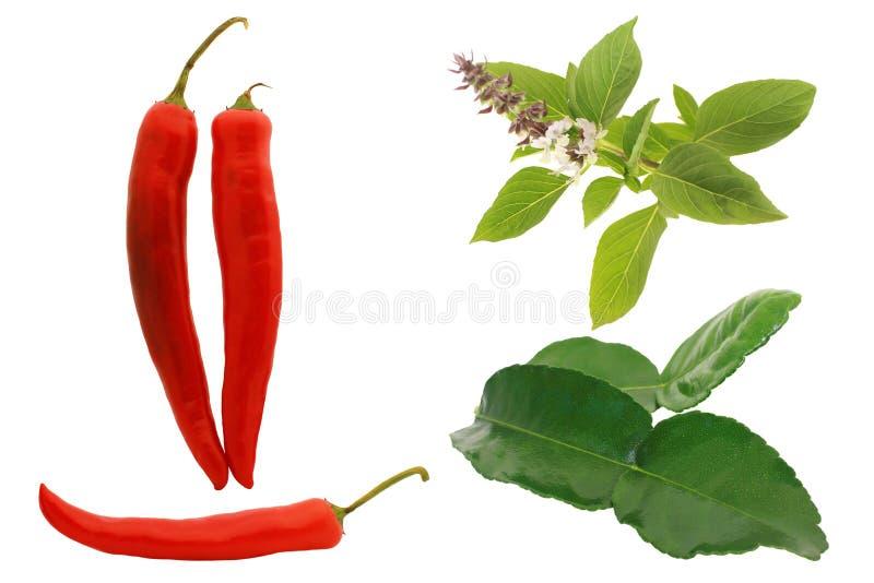 Czerwony chili, basil, kaffir odizolowywa na bielu obraz stock