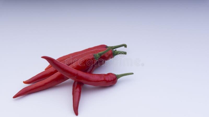 Czerwony chillie na białym tle Selekcyjnej ostrości i uprawy czerep fotografia royalty free