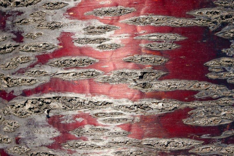 Czerwony Czereśniowy drzewnej barkentyny szczegół obrazy stock