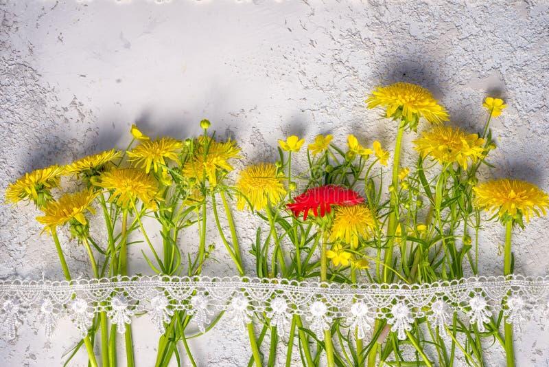 Czerwony dandelion między żółtym ordynariuszem ones zdjęcia stock