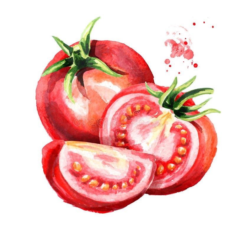 Czerwony dojrzały pomidoru skład Akwareli ręka rysująca ilustracja, odizolowywająca na białym tle royalty ilustracja