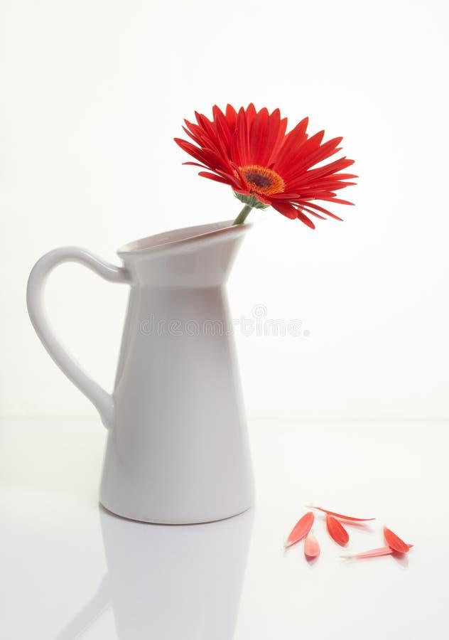 Czerwony Gazania kwiat na białej eleganckiej wazie Kreatywnie życie fotografia Wciąż fotografia royalty free