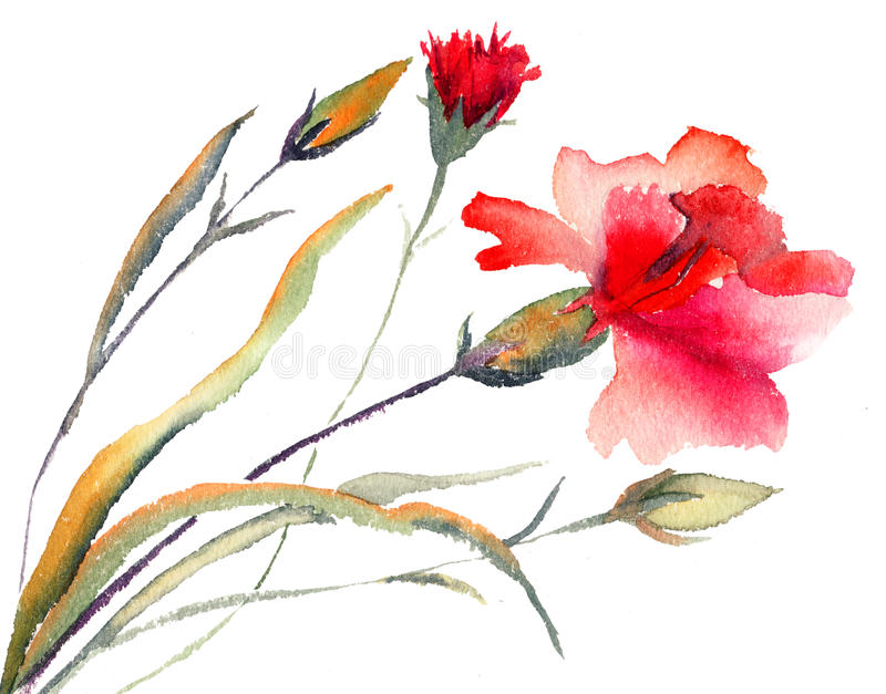 Czerwony goździków kwitnąć royalty ilustracja