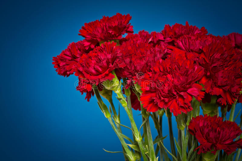 Goździków kwiaty zdjęcie stock