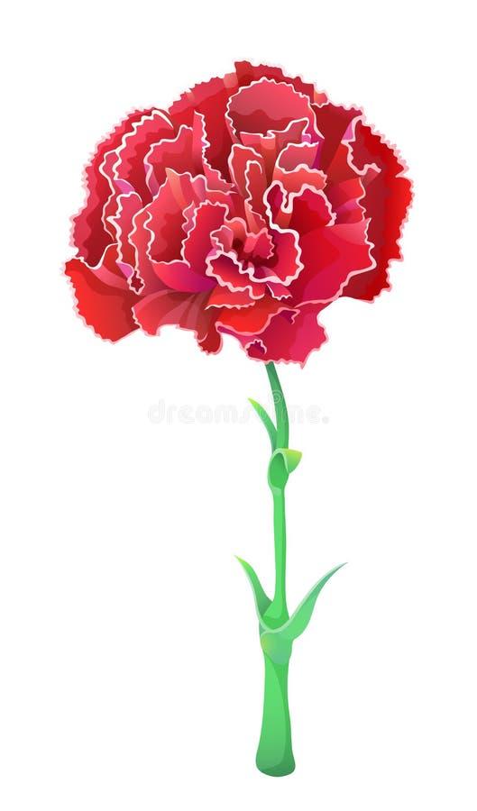 Czerwony go?dzik odizolowywaj?cy na bia?ym tle Piękny wektorowy kwiat ilustracji