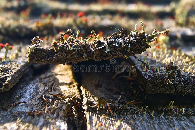 Czerwony grzyba dach obraz stock