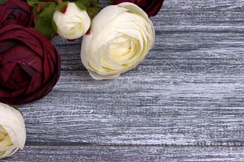 Czerwony i biały jaskier kwitnie ranunculus na szarym drewnianym tle kosmos kopii obrazy royalty free