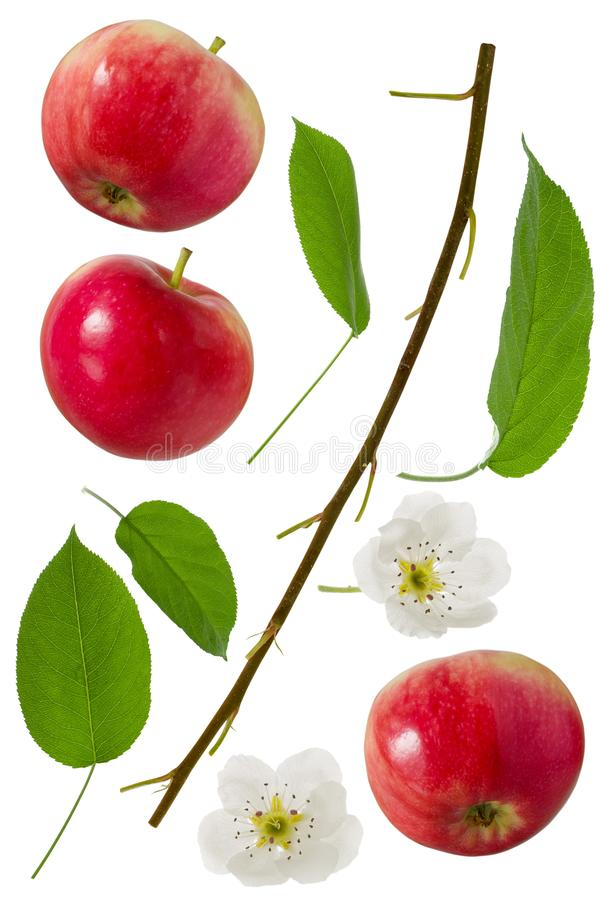 Czerwony Jabłczany cały set z zielonym liściem, kwiatem i gałąź odizolowywającymi na białym tle jako pakunku projekta element, obrazy royalty free
