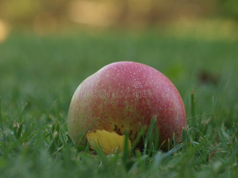 Czerwony jabłko i mały żółty liść w zielonej trawie  zdjęcie royalty free
