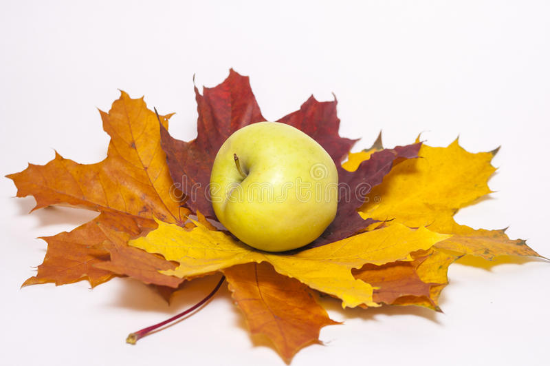 Czerwony jabłko na jesień liściach klonowych obrazy royalty free
