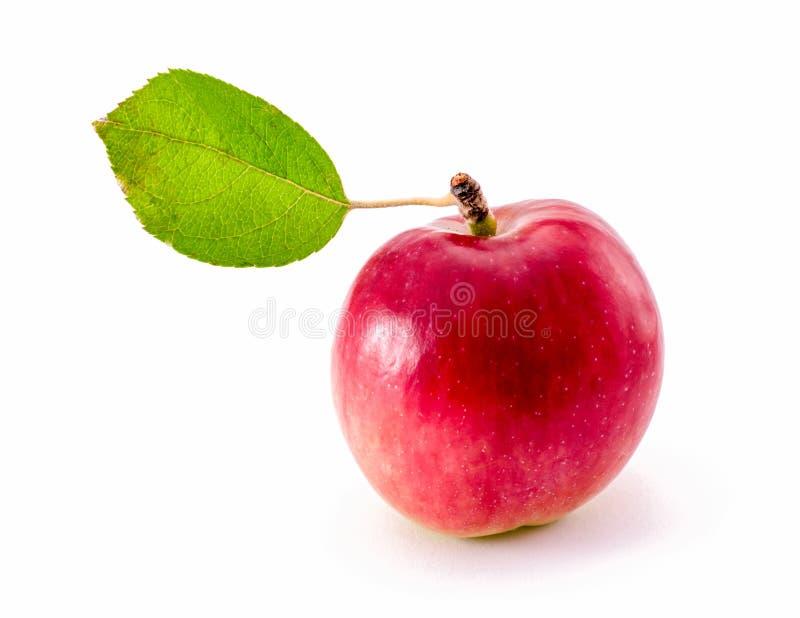 Czerwony jabłko z jeden dużym zielonym liściem odizolowywającym na białym tle obrazy stock