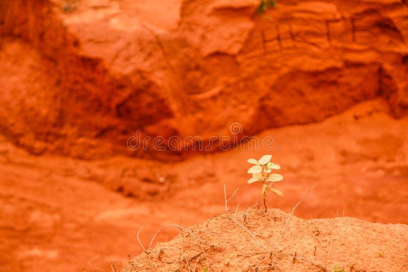 Czerwony jar blisko Mui Ne, południowy Wietnam zdjęcia stock