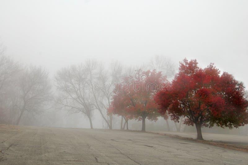 czerwony jesienią zdjęcia stock