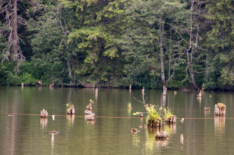 Czerwony jezioro - Lacul Rosu obrazy royalty free