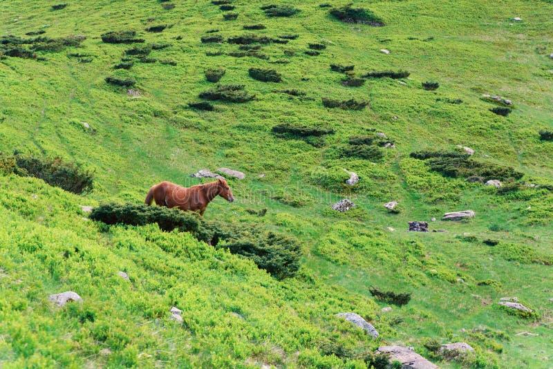 Czerwony koń w górach na zielonej trawie fotografia stock