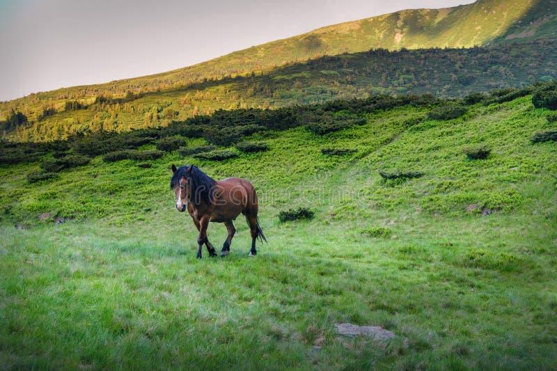 Czerwony koń w górach na zielonej trawie zdjęcie stock