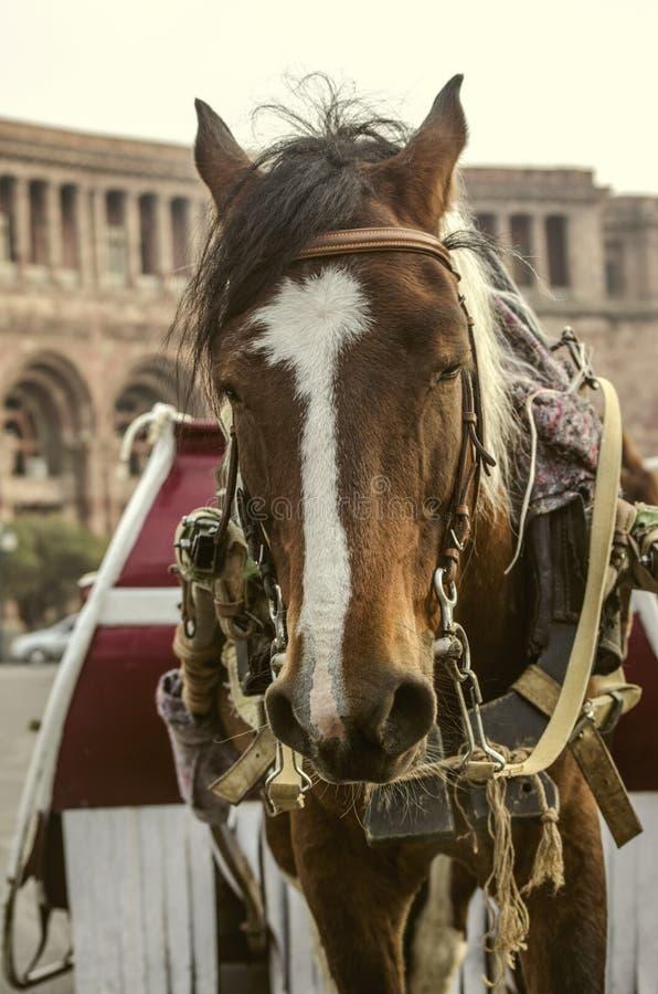 Czerwony koń z biel punktami i czarna grzywka w nicielnicie kwadrat w Yerevan, odpoczywa po wycieczki z dziećmi obraz royalty free