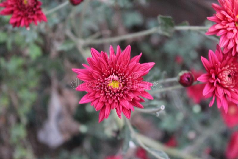 Czerwony kolor kwitnie w gardon zdjęcia stock