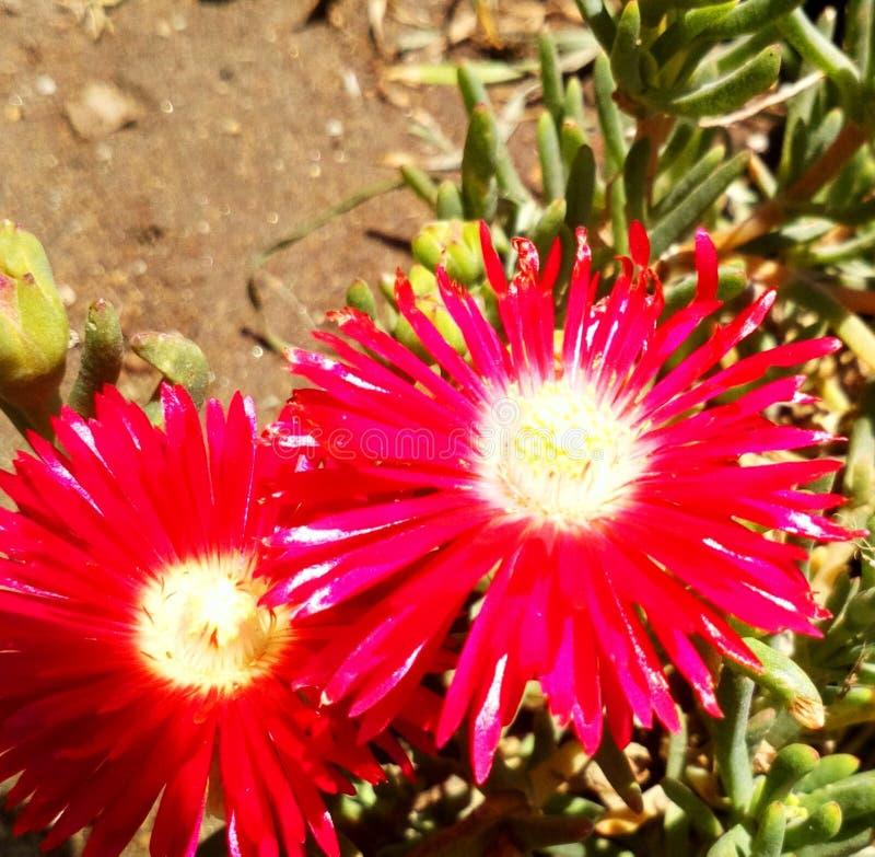 Czerwony kolor w naturze zdjęcie royalty free