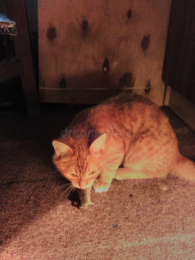 Czerwony kot łapał myszy w artysty studiu obraz stock