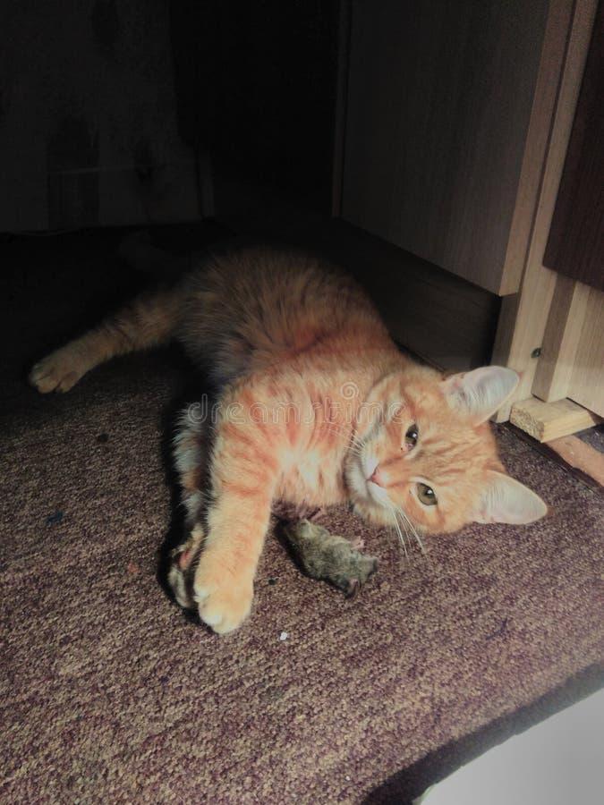 Czerwony kot łapał myszy w artysty studiu fotografia stock