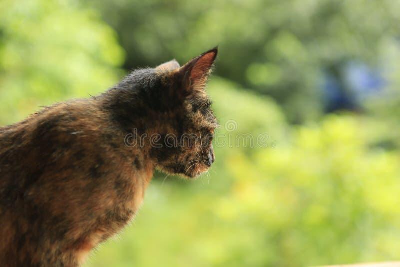 Czerwony kot na zielonym tle zdjęcie royalty free