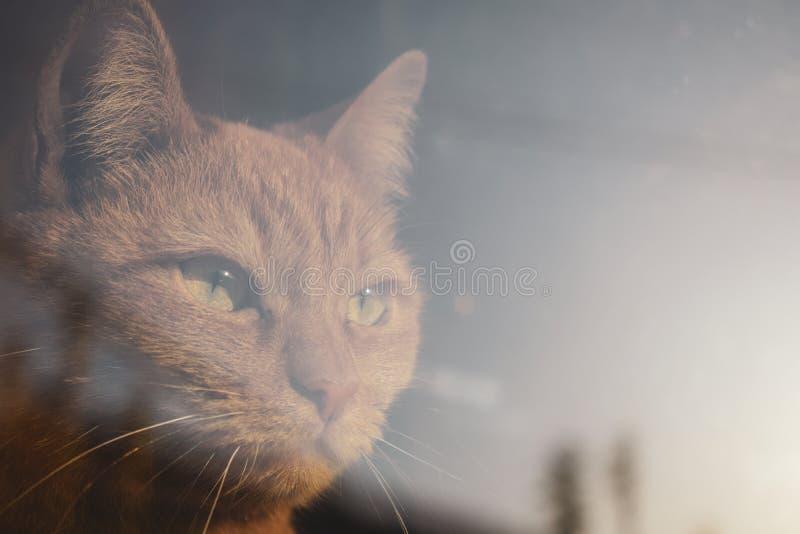 Czerwony kot patrzeje przez okno Powa?ny przebijania spojrzenie zdjęcia royalty free